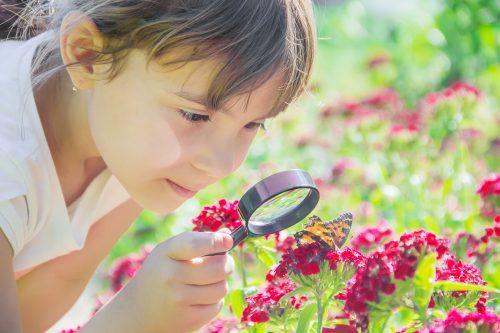 Schmetterlinge faszinieren nicht nur Kinder. Sie werten auch jeden Garten auf.SHUTTERSTOCK