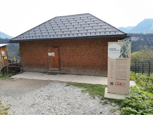 Seit Donnerstag hat das Fuchshaus im Feldkircher Wildpark wieder geöffnet. Vier Erwachsene und sechs Kinder dürfen gleichzeitig hinein. Wildpark