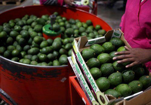 Südafrika ist einer der zehn größten Avocado-Exporteure der Welt. Reuters