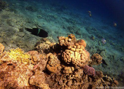 Viele Riffe befinden sich in einem schlechten Zustand. AFP