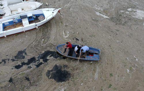 Das Marmarameer wird von einer grauen Schleimschicht verdreckt. Apa