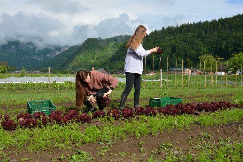 Es wurde frisches Bio-Gemüse für den Unterricht geerntet.