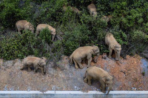 Es wurden Barrieren errichtet, um die Elefanten von Wohngebieten fernzuhalten. AP