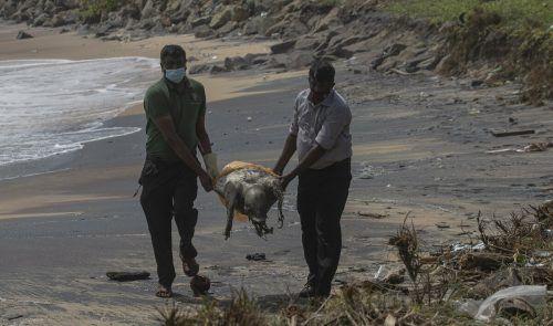Fast 100 verendete Meereschildkröten wurden bereits an die Küste gespült. ap
