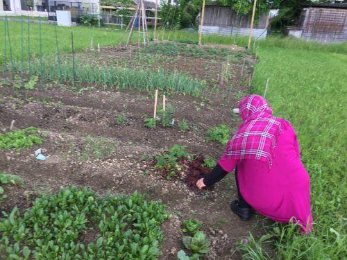 Fatma hält sich gerne in der Natur auf, am liebsten in ihrem Gemüsegarten. VN/KUM