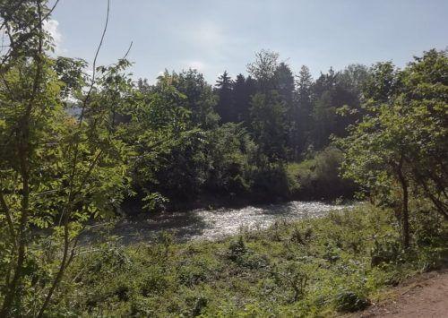 Im Sulner Auwald an der Frutz soll eine Pflegeoffensive ökologisch stabile Waldbestände schaffen. Mäser