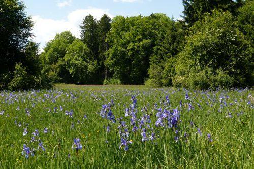 Iriswiese in Koblach. Maria Berg