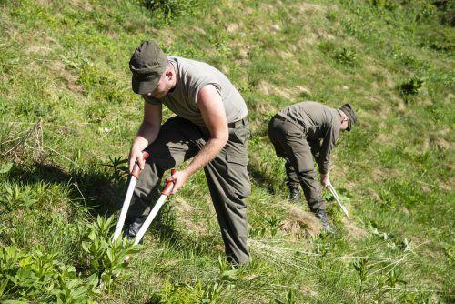 Junge Wachsoldaten schneiden Unkraut und Gebüsche unweit der Golmer Bergstation zurück.VN/Jun