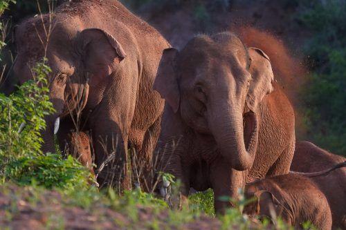 Lautsignale sind für Elefanten ein wichtiges Kommunikationmittel. Reuters