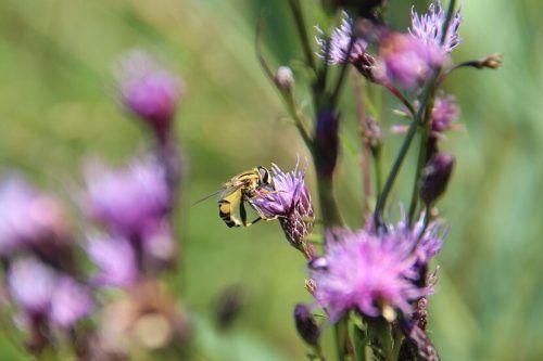 Mitten im Siedlungsraum lebt auf den Streuwiesen im Schubbas eine Vielzahl an Insekten. Naturschutzbund