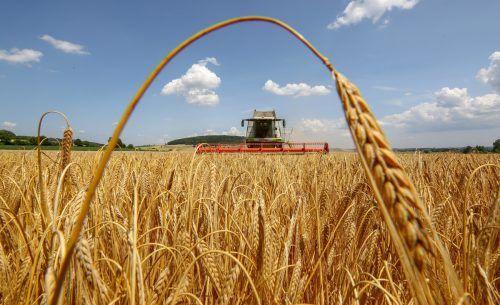 Patente auf Pflanzen und Samen sorgen bei den Gerstenbauern und kleinen Privatbrauereien für große Unsicherheit. APA