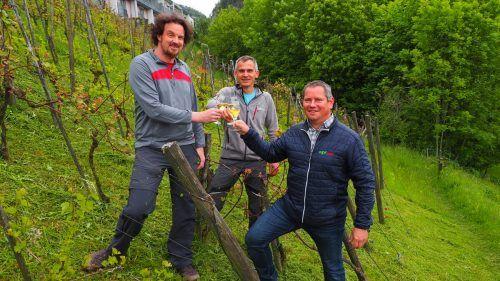 Rund 150 Stunden investieren Michael Niegel, Martin Aberer und Harald Berghammer jedes Jahr in ihr Hobby, den Weinbau. EGLE