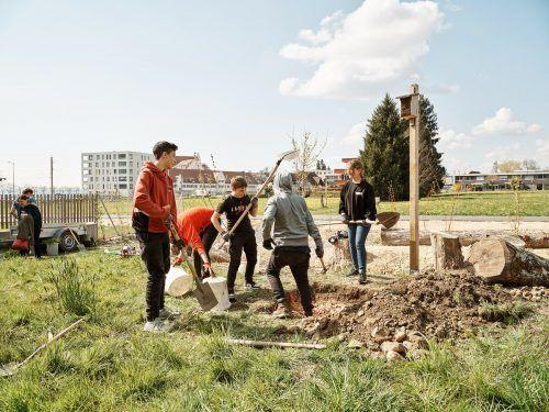 Schüler der 3a Klasse der Mittelschule Lochau bearbeiten den Boden beim Oberlochauerbach. Hier entsteht ein Lebensraum für Tiere und Pflanzen.