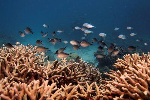 Seit 40 Jahren gehört das Barrier Reef zum Weltnaturerbe. reuters