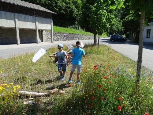 Bei der Exkursion wurde die Lebensweise der Wildbiene genauer betrachtet.Stadt Bludenz