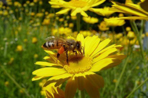 """Der """"Bee-Deal"""" für das Wohl von bestäubenden Insekten gehört zu den Umweltprojekten der Stadt Dornbirn.Stadt"""