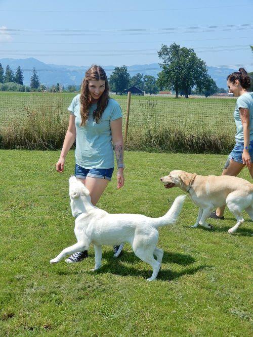 Die Liebe und das Verständnis für das Tier stehen für die beiden Hundepsychologinnen im Mittelpunkt.cth (2)