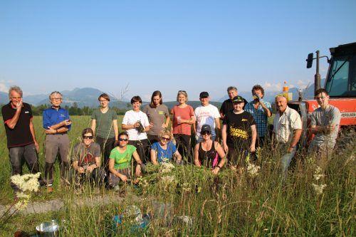 Freiwillige Helfer befreiten das Natura-2000-Gebiet Bangs-Matschels von der invasiven Goldrute. Heilmann