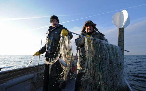 Für die Fischer am Bodensee wird die Situation nicht einfacher. Die Fische haben einige Feinde.dpa