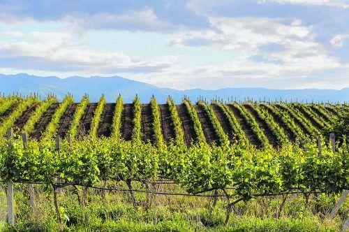Auch in Bulgarien wird Wein angebaut. Vor allem rund um Melnik.