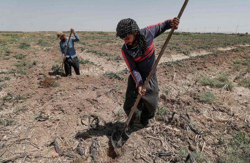 Aufgrund von Dürre könnten bald zwölf Millionen Menschen in Syrien und dem Irak ihre Lebensgrundlage verlieren. afp