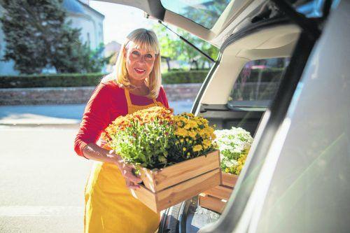 Chrysanthemen sorgen im Spätsommer für tolle farbliche Akzente.iStock