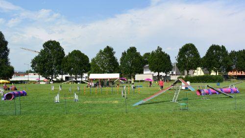Der Rankler Hundesportplatz war Austragungsort des Turniers. HSV Rankweil