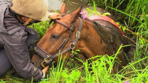 Der Zustand des Pferdes war im Großen und Ganzen gut, hieß es. m. shourot