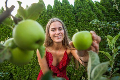 Die Äpfel kommen mit dem vielen Wasser halbwegs gut zurecht. Bis zur Ernte würde aber auch ein wenig mehr Sonne nicht schaden. VN/Steurer