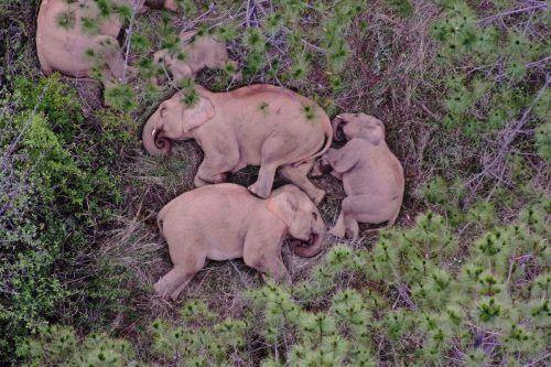 Die Elefantenherde hat vor einem Jahr ihr Reservat verlassen. afp