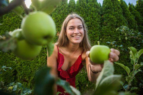 Die ersten Äpfel kann Daria bereits ernten. Wer zu viel Früchte zuhause hat oder sucht, kann bei der Obstbörse mitmachen. VN/Steurer