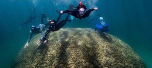 Die mehr als zehn Meter breite Koralle soll mehrere Hundert Jahre alt sein.