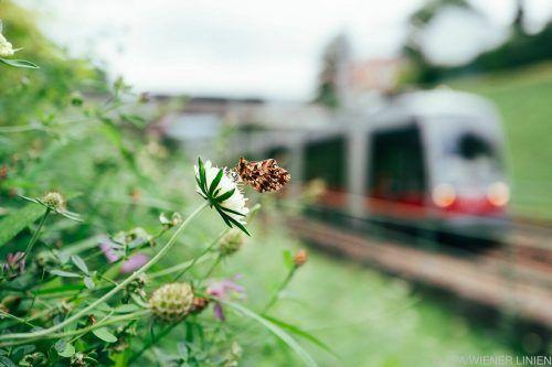 Ein Maßnahmenkatalog soll die Biodiversität in der Stadt forcieren. APA