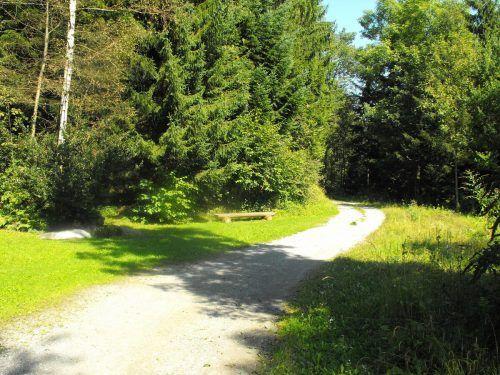 """Mit dem Seniorenprogramm """"Lebenslust und Tatendrang"""" geht es in den Tostner Wald. W. Fontana"""