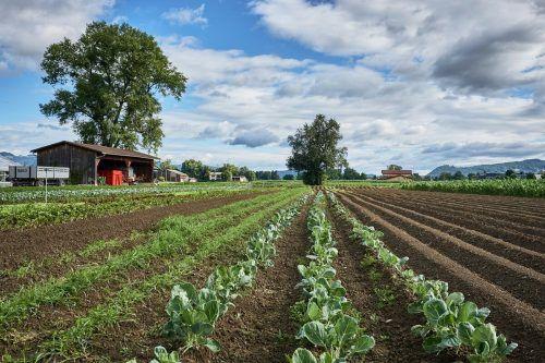 Bio-Landwirtschaft zeigt bereits heute vor, wie eine zukunftsfähige Nahrungsmittelproduktion unter Erhalt von Kultur- und Naturflächen aussehen kann. BIO AUSTRIA/Matthias Nester/Ivo Vögel/Christoph Liebentritt