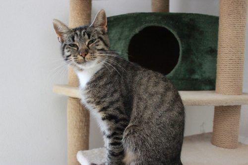 Die Schmusekatze Molly und ihr Freund Ceasar freuen sich auf ein neues Zuhause.