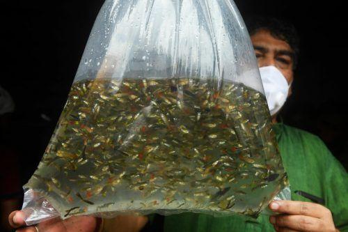 Fische wurden auch in der Vergangeneheit gegen die Mücken eingesetzt. Ap