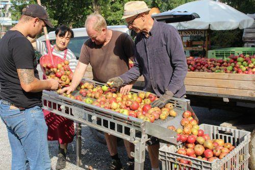 Qualität im Fokus: Schlechtes Obst wird konsequent aussortiert. STP/3