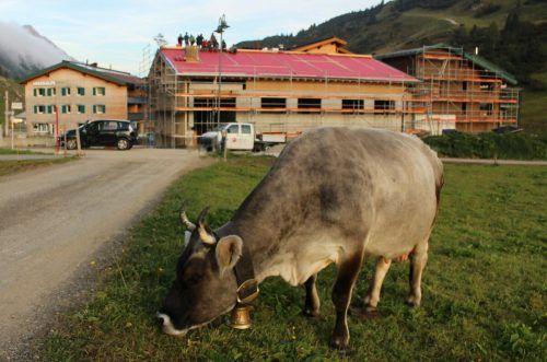 So eng sind Tourismus und Alpwirtschaft kaum einmal verbunden: Auf der Jägeralpe weidet das Vieh hautnah um das Hotel, dem die Alpe den Namen gab. stp