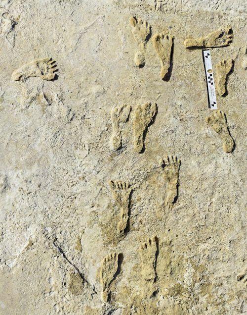 Spektakulärer Fund in New Mexico: 23.000 Jahre alte Fußspuren. reuters