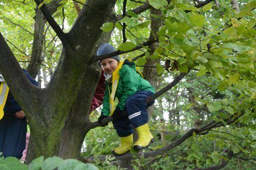 Auf Bäume klettern gehört zu den tollsten Aktivitäten im Wald.bvs (3)