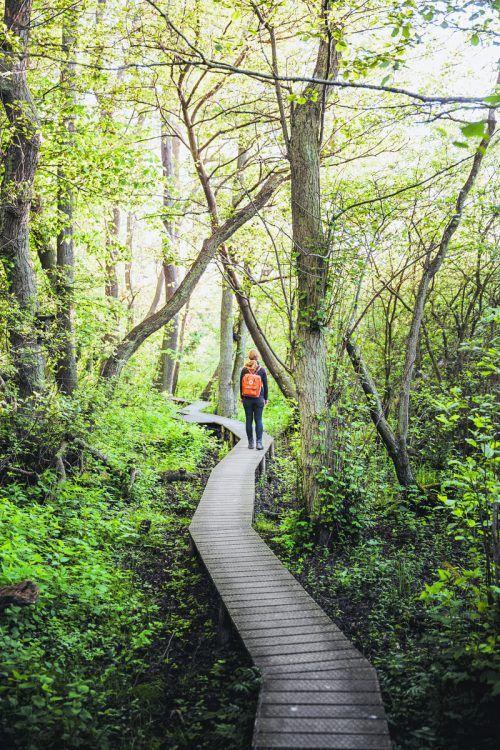 Auf der dänischen Ostseeinsel Seeland gibt es verschiedenste Themenwege, die durch die Natur führen. sarahinthegreen.dk (2)