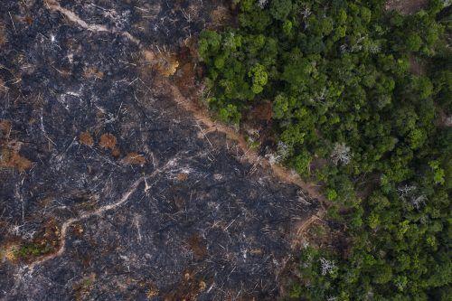 Das Amazonasgebiet verzeichnet die größte Abholzung und die schlimmsten Brände seit mehreren Jahren. AP