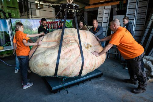 Der Riesenkürbis brachte stolze 1217,5 kg auf die Waage. dpa