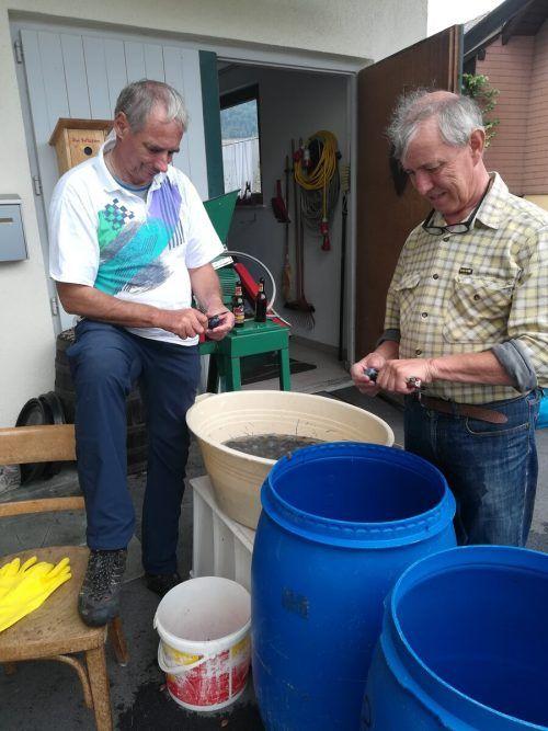 Hans-Peter Salomon und Erwin Schrottenbaum, hier beim Einrebeln von Vogelbeeren, verbindet eine langjährige Freundschaft.