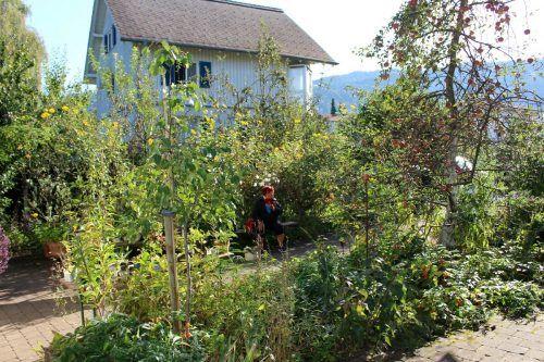 """Herbstliche Pflanzentauschbörse in """"Melittas Garten"""" in Lochau."""