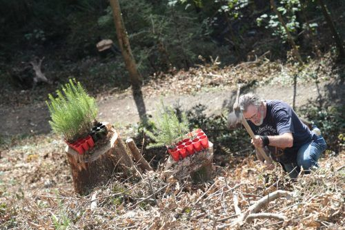 Im kommenden Jahr wird der 10.000. Baum gepflanzt.